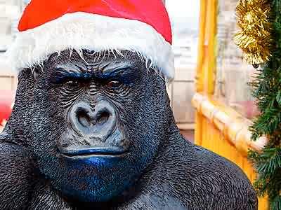 Puzzles, casse-têtes en ligne Animaux et Nature : le Gorille de Noël